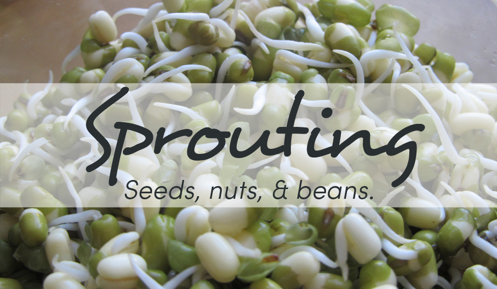 Sprouting & Soaking: What is it & Why do it (& is it just for Hippies)